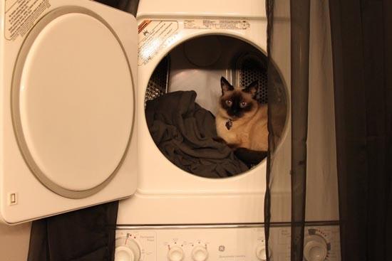 Γάτες στα πιο παράξενα μέρη (8)