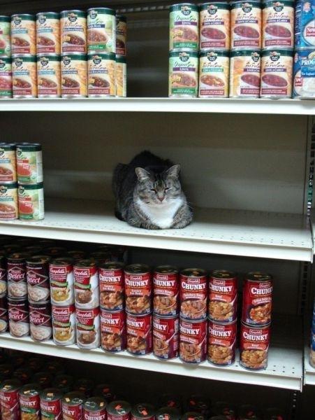Γάτες στα πιο παράξενα μέρη (9)