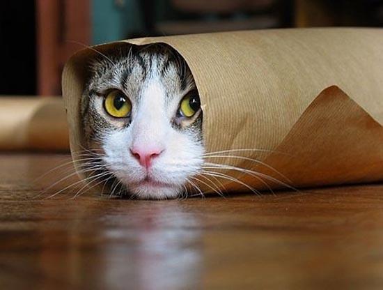 Γάτες στα πιο παράξενα μέρη (10)