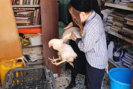 Κότα με 4 πόδια