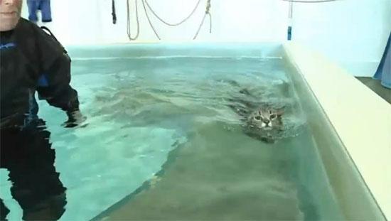 Μαθήματα κολύμβησης για παράλυτες γάτες