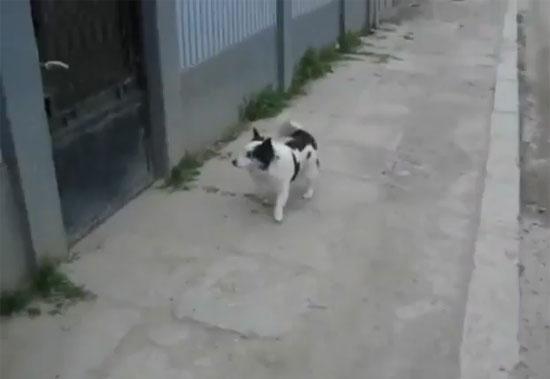 Πανέξυπνος σκύλος video