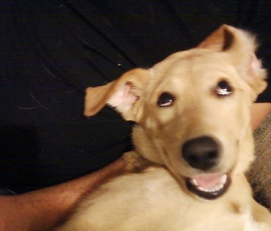 Τα 25 πιο παράξενα χαμόγελα σκύλων (25)