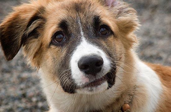 Τα 25 πιο παράξενα χαμόγελα σκύλων (24)