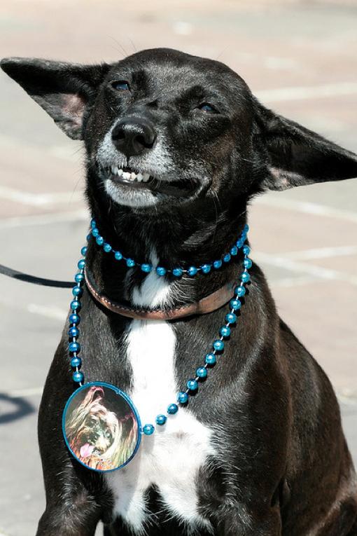 Τα 25 πιο παράξενα χαμόγελα σκύλων (22)