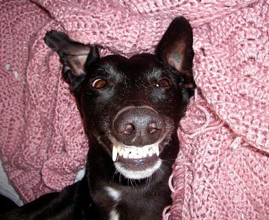 Τα 25 πιο παράξενα χαμόγελα σκύλων (17)