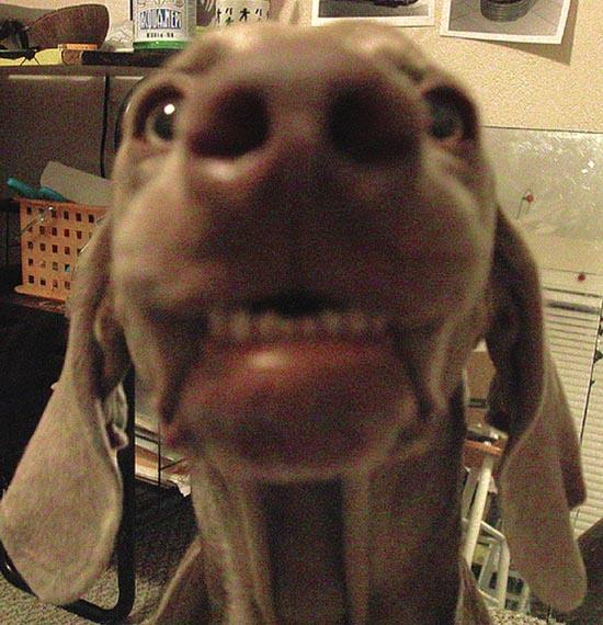 Τα 25 πιο παράξενα χαμόγελα σκύλων (16)