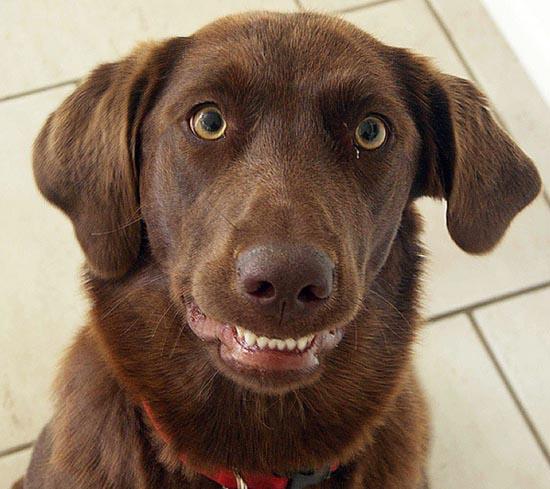 Τα 25 πιο παράξενα χαμόγελα σκύλων (14)