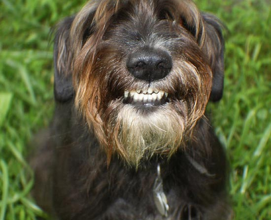 Τα 25 πιο παράξενα χαμόγελα σκύλων (13)