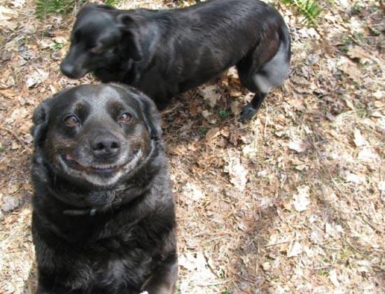 Τα 25 πιο παράξενα χαμόγελα σκύλων (12)