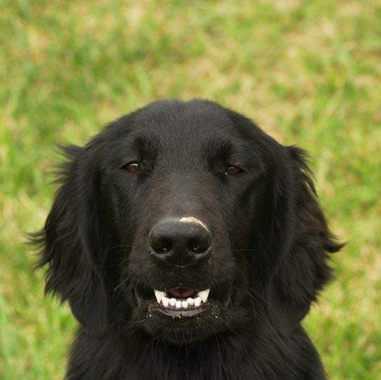 Τα 25 πιο παράξενα χαμόγελα σκύλων (11)