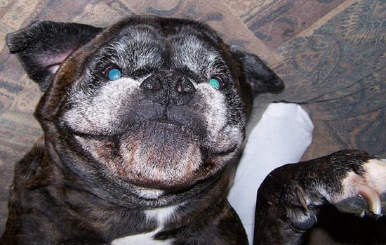 Τα 25 πιο παράξενα χαμόγελα σκύλων (8)