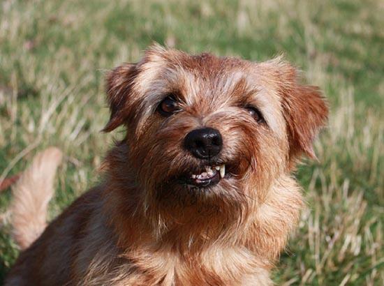 Τα 25 πιο παράξενα χαμόγελα σκύλων (7)