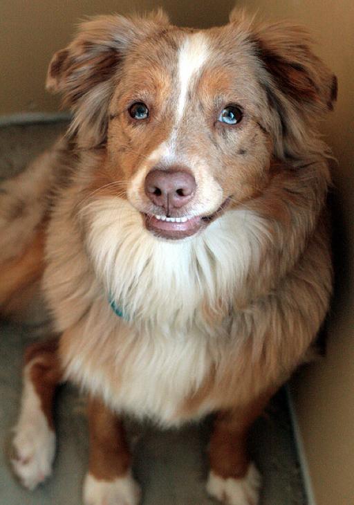 Τα 25 πιο παράξενα χαμόγελα σκύλων (6)