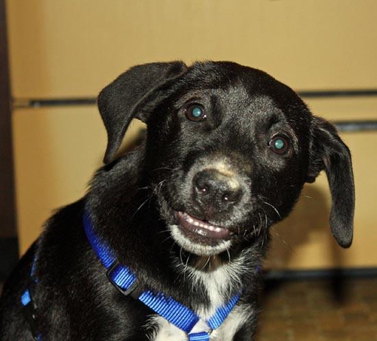 Τα 25 πιο παράξενα χαμόγελα σκύλων (2)