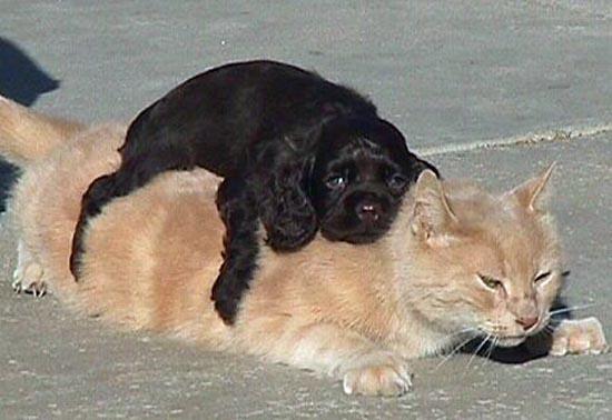 Περιφρονητικές γάτες (13)