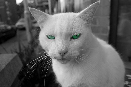 Περιφρονητικές γάτες (12)