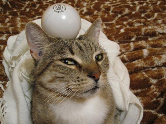 Περιφρονητικές γάτες (10)