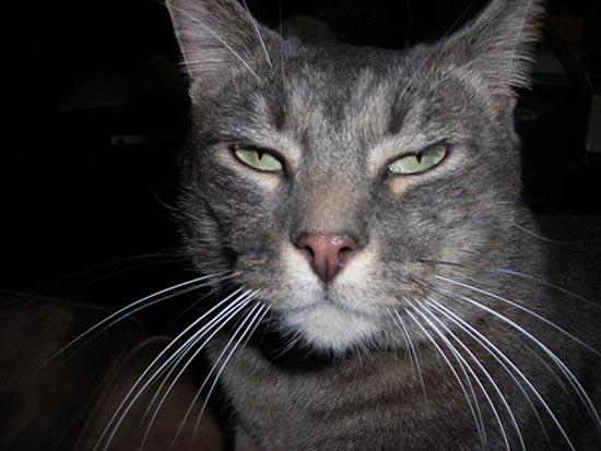 Περιφρονητικές γάτες (9)