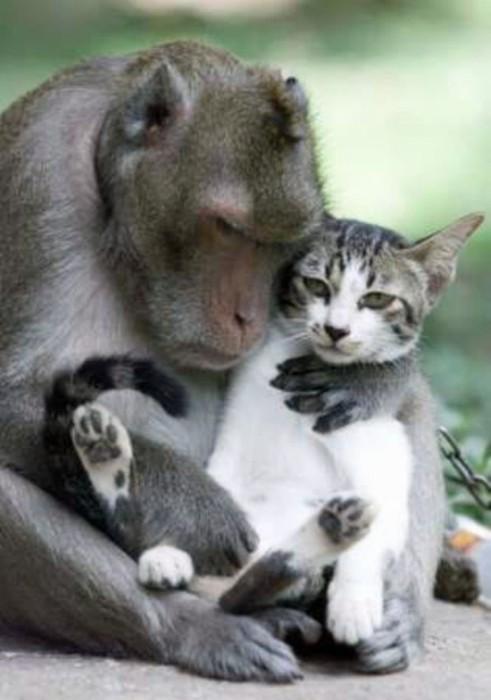 Περιφρονητικές γάτες (1)