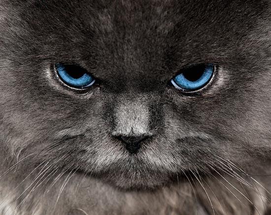 Περιφρονητικές γάτες (8)