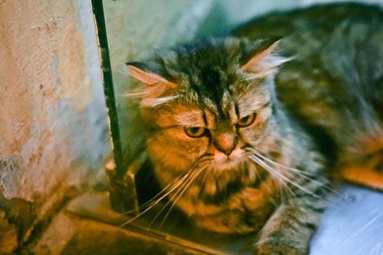 Περιφρονητικές γάτες (7)