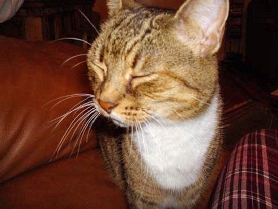 Περιφρονητικές γάτες (6)