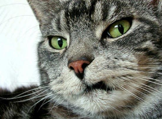 Περιφρονητικές γάτες (5)