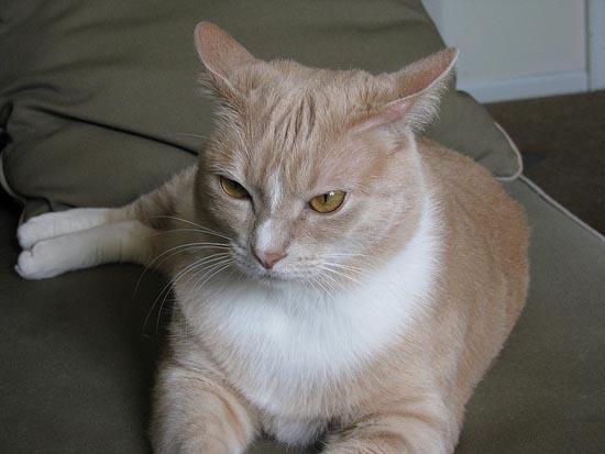 Περιφρονητικές γάτες (4)