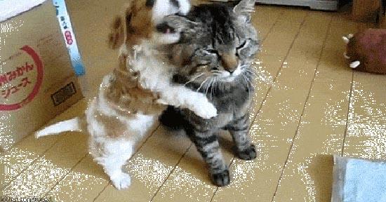 Περιφρονητικές γάτες (3)