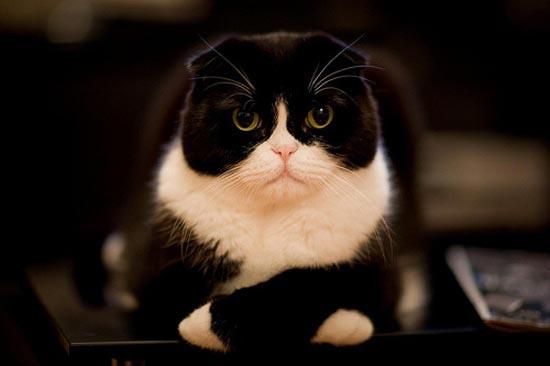 Περιφρονητικές γάτες (2)