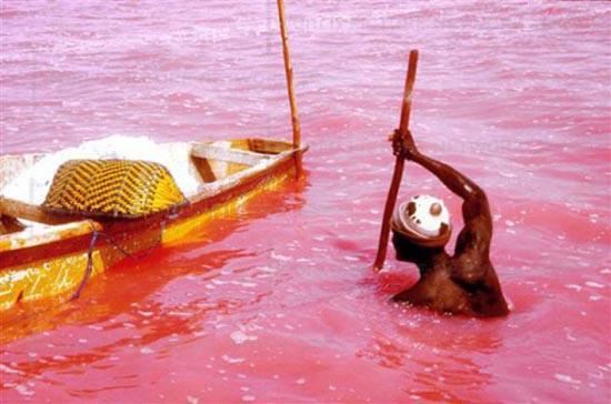 Ροζ λίμνη στη Σενεγάλη (3)