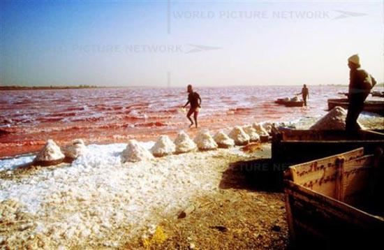 Ροζ λίμνη στη Σενεγάλη (5)