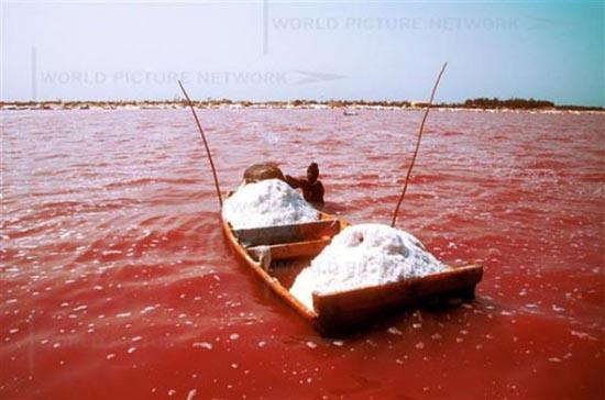 Ροζ λίμνη στη Σενεγάλη (7)