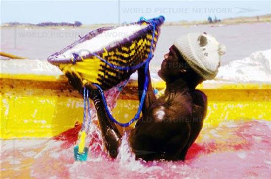 Ροζ λίμνη στη Σενεγάλη (8)