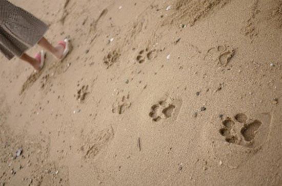 Σαγιονάρες με πατημασιές ζώων (4)