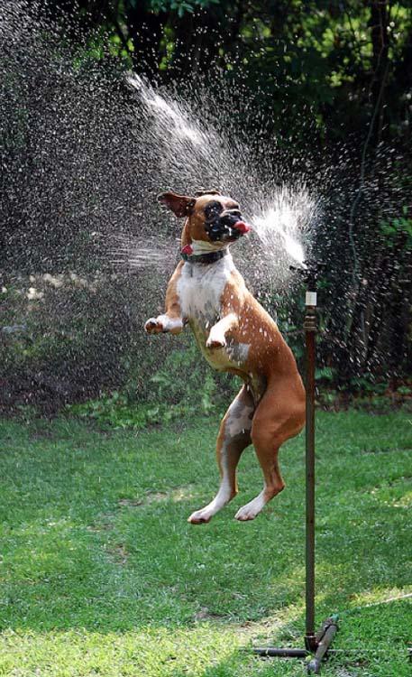 Σκύλοι vs Ποτιστήρια (19)