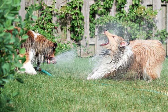 Σκύλοι vs Ποτιστήρια (15)