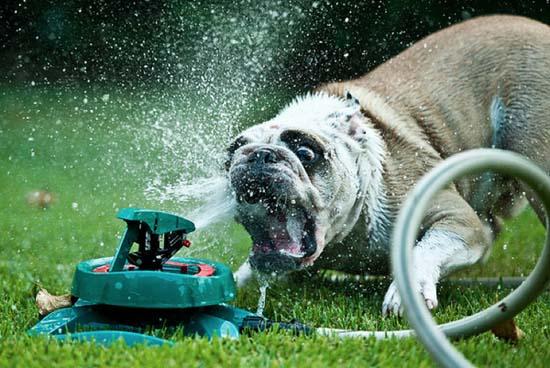 Σκύλοι vs Ποτιστήρια (1)