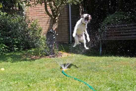 Σκύλοι vs Ποτιστήρια (14)