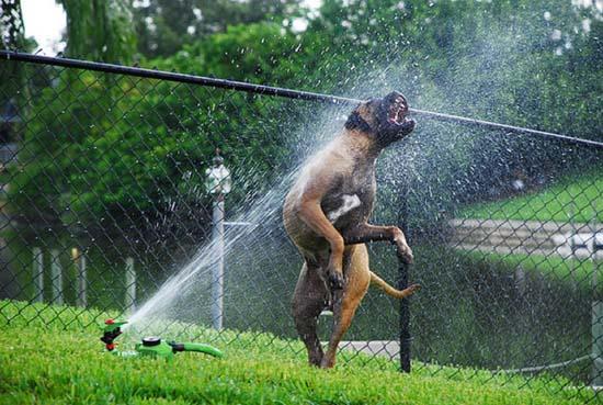 Σκύλοι vs Ποτιστήρια (12)
