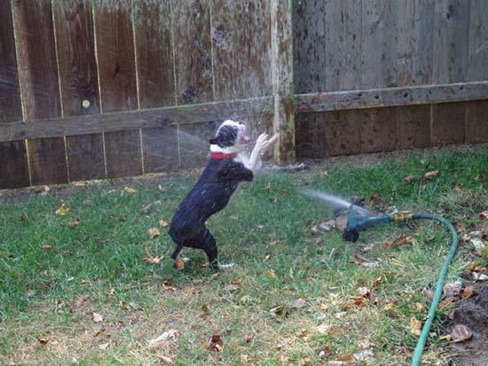 Σκύλοι vs Ποτιστήρια (8)