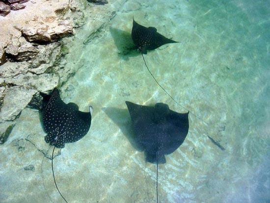 Συγχρονισμένη κολύμβηση... ζώων! (1)