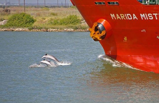 Συγχρονισμένη κολύμβηση... ζώων! (5)