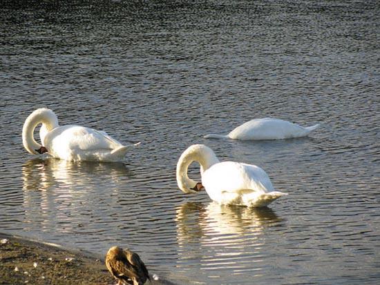 Συγχρονισμένη κολύμβηση... ζώων! (7)