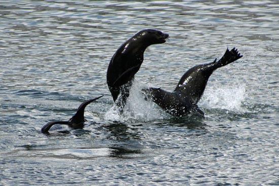 Συγχρονισμένη κολύμβηση... ζώων! (9)