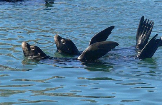 Συγχρονισμένη κολύμβηση... ζώων! (15)