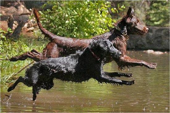 Συγχρονισμένη κολύμβηση... ζώων! (21)