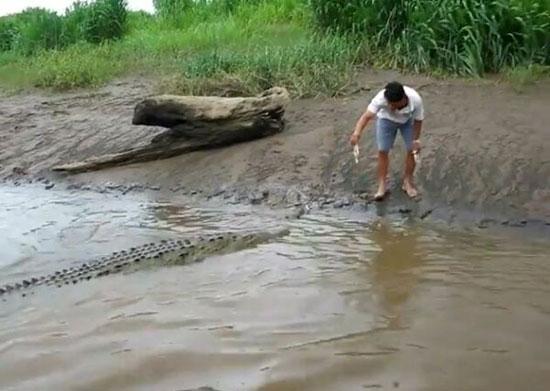 Ταΐζοντας έναν κροκόδειλο με το χέρι