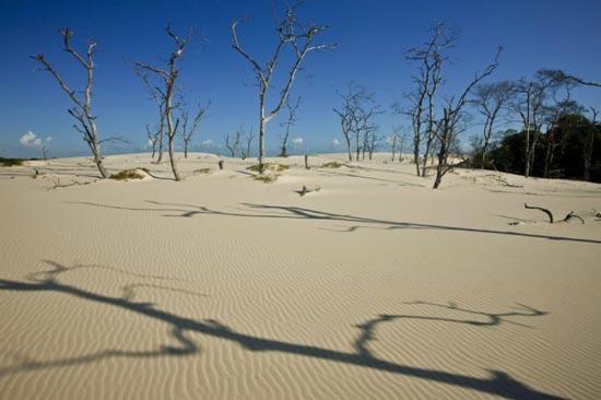 Εντυπωσιακοί αμμόλοφοι στην Βραζιλία (6)